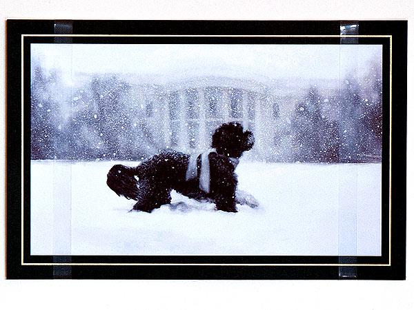 2012_bo-obama-600