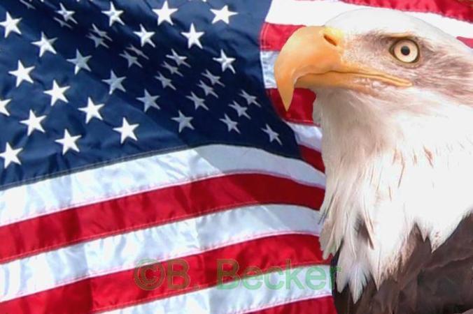 american-flag-eagle-3