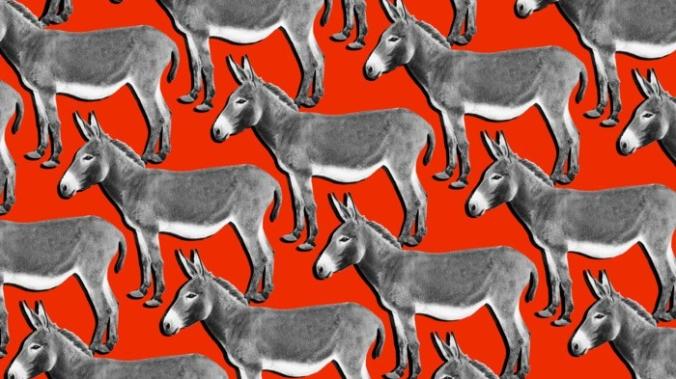 28-donkeys-w700-h700.jpg